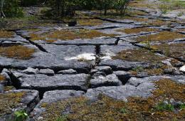 Understanding Alvars – Manitoulin Island