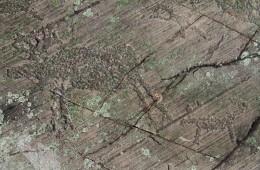 Rock Carvings – Petroglyphs